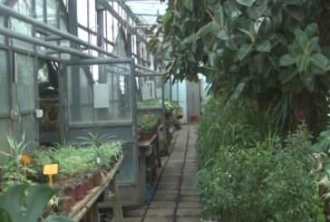 JKP Kruševac – stalna briga o uređenju zelenih površina u gradu