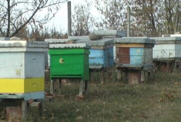 Aktivnosti pčelinjih društava primerene aktuelnim temperaturnim uslovima