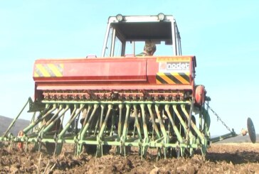 Okasnela setva pšenice realizovana na preko 90 odsto planiranih površina