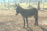 Farma magaraca u selu Trmčare