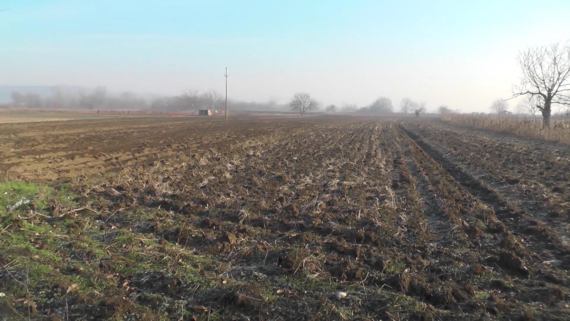 Ozime žitarice na području Rasinskog okruga u različitim feno fazama razvoja