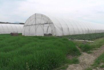 Na poljoprivrednom gazdinstvu porodice Bašić u Gornjem Stupnju