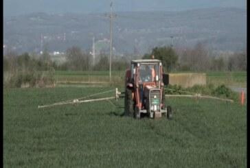 Poljoprivrednici u varvarinskoj opštini i u vreme policijskog časa mogu do svojih parcela