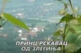 PRINC RSKAVAC OD ZLEGINJA (kompletna reportaža)