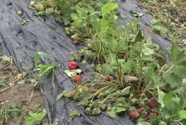Najveću štetu u jučerašnjem nevremenu pretrpeli delovi Kruševca, Aleksandrovac, Brus i neka sela u podnožju Jastrepca