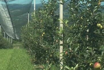 Aktuelne subvencije zaregistrovana poljoprivredana gazdinstva
