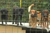 Azil za pse u Srnju funkcioniše i u vreme korone bez problema