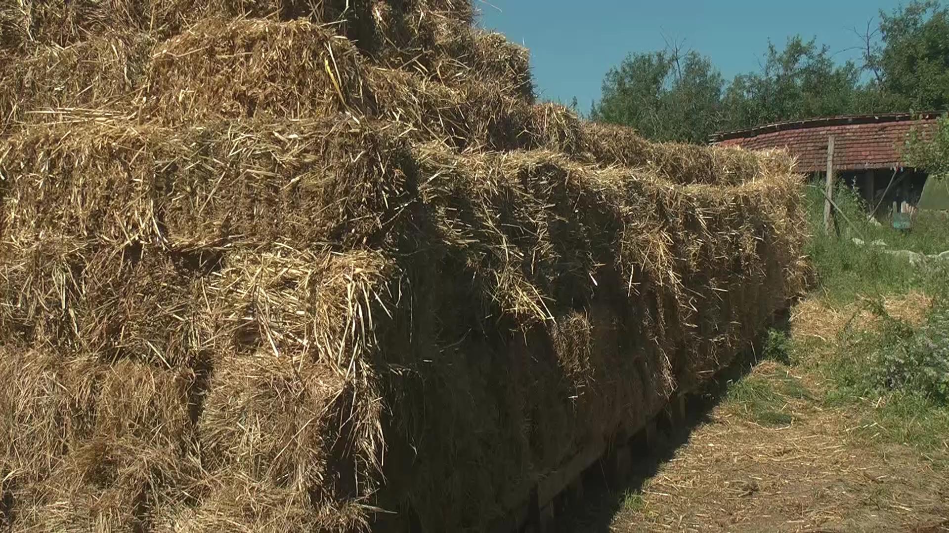 Žetva pšenice u punom jeku, a ječma na samom kraju