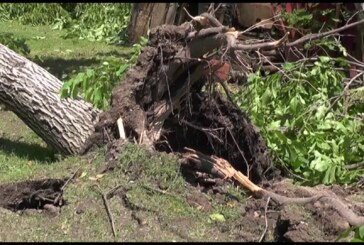 Nevreme u Čitluku lomilo i obaralo stabla