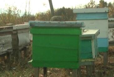 Avgust u pčelarstvu najvažniji mesec