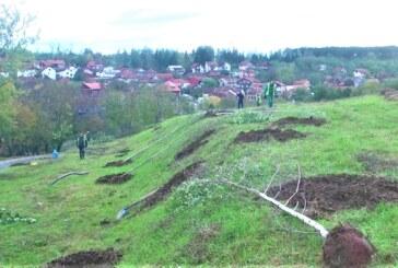 Pošumljavanje erozivnog tla Novog groblja u cilju sprečavanja pojave klizišta