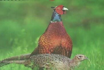 """Lovačko udruženje """"Kruševac"""" u lovište """"Rasina"""" naselilo 2.000 četvoromesečnih fazana"""