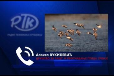 Evropski vikendposmatranja ptica