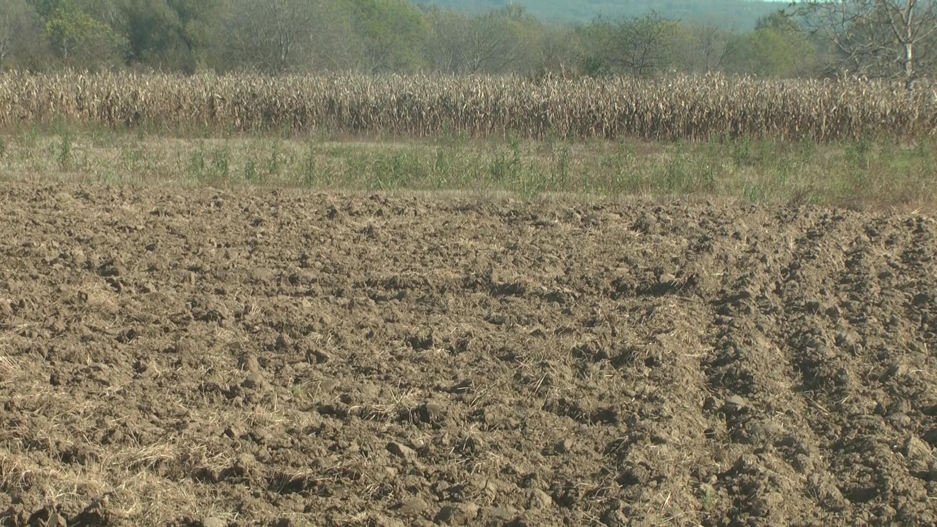 Setva pšenice u punom jeku
