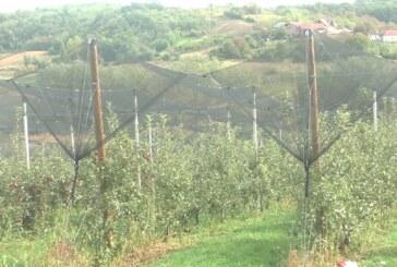 Zoran Miletić iz Lazarevca godišnje proizvede oko 50 hiljada sadnica lozno-sadnog materijala