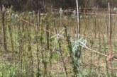 Нa teritoriji bruske opštine otpočinju poljoprivredni radovi