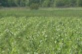 Uprava za agrarna plaćanja – olakšice za isplatusubvencija po hektaru biljne proizvodnje