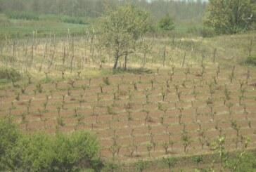 Toplo vreme i padavine – primena zaštitinih mera u voćnim zasadima
