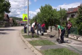 Za lepše ulice i parkove ispred zgrada: Sadnja jorgovana u Trsteniku