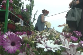 Kruševac lider u proizvodnji cveća i sadnog materijala