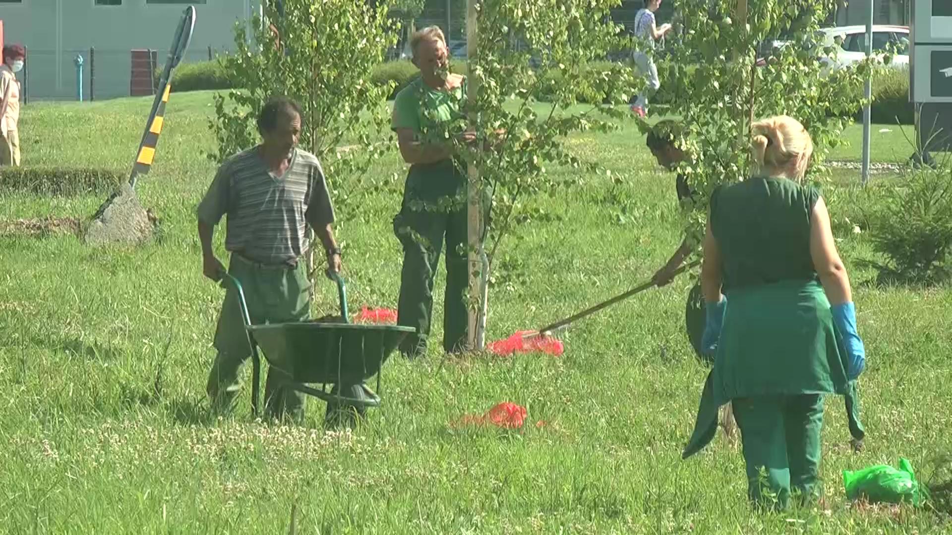 Javno komunalno preduzeće Kruševac na delu Bruskog puta zasadilo preko 120 sadnica