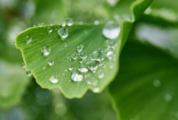 Konačno osveženje, stiže kiša i pad temperature za desetak stepeni